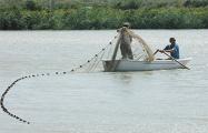 «Сейчас мы вылавливаем из белорусских озер последних особей угря»