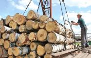 Белорусские власти массово вырубают и продают лес-кругляк