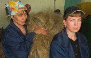 Работникам Миорского льнозавода предлагают кормиться надеждами