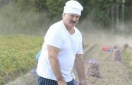 Лукашенко застраховал урожай