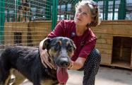 Итоги визита помощницы Брижит Бардо: власти молчат, зато белорусы разобрали собак и кошек из приюта