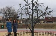 В Каменце установили памятник грецкому ореху за 12 тысяч рублей
