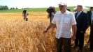 Белорусские аграрии побили рекорд по долгам. Какие будут последствия?