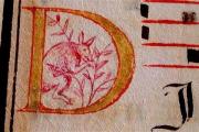 В португальском манускрипте нашли анахроничного кенгуру