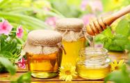 Благодаря поддержке ЕС в Европе стали производить больше меда