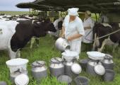МАРТ взял под контроль закупку молока переработчиками