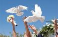 Сколько стоит организовать свадьбу в Беларуси?