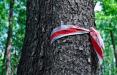 Каждый день по всей Беларуси появляются национальные флаги