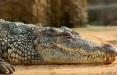 В Ялте 70 крокодилов вырвались на свободу после потопа: видео