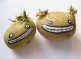 Белорусские ученые создали «диетическую» картошку