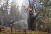В Польше сгорел 750-летний дуб