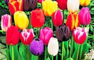 «Мужчины проснутся 8 марта и скупят фены и плойки»
