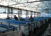 Правительство предложило госбанкам выдать кредиты восьми рыбхозам