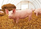 Японский бизнес завлекают сельским хозяйством