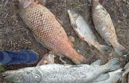 Фотофакт: В поселке под Минском массовый мор рыбы