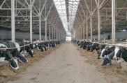 Директор сельхозпредприятия приписал более 270 тонн надоев молока