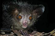 WWF составил список самых страшных животных Земли