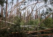 Ликвидация последствий урагана 2016 года практически завершена