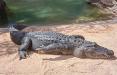 Крокодилы на «прогулке» и осетры на улицах: видео Ялты после потопа