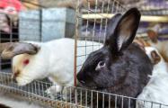 Как белорусская семья развивает бизнес по выращиванию кроликов
