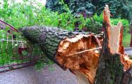 В Бресте сильный ветер «срубил» дерево, а дождь затопил улицу Гоголя