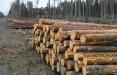 Кто крадет белорусский лес?