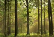 В Беларуси подготовлены новые правила пожарной безопасности в лесах