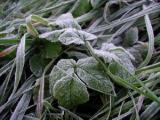 Слабые заморозки возможны в Беларуси в ночь на 27 мая