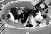 В Японии умерла кошка-начальник вокзала