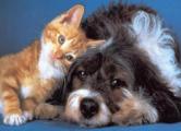 Британцы считают домашних животных ближе тещи и свекрови