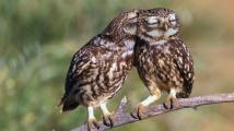 20 фотографий прекрасных сов