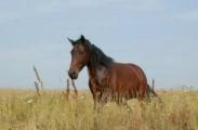 Из-за лошади могут конфисковать автомобиль и посадить в тюрьму