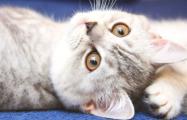 В Бельгии впервые кошка заразилась коронавирусом от хозяина