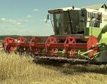 Хозяйства Беларуси преодолели трехмиллионный рубеж по намолоту зерна