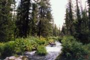В Минской области вводится запрет на посещение лесов