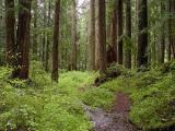 По всей стране ограничено посещение лесов