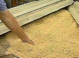 Экспорт российского зерна запрещен также в Беларусь и Казахстан