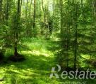 Россиянин украл более 140 куб.м белорусского леса