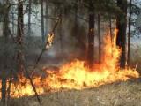 Вертолет МЧС Беларуси приступил к тушению лесных пожаров в Тамбовской области