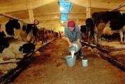 Закупочные цены на молоко повышены на 10%