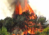 В двух областях объявлена чрезвычайная пожарная опасность