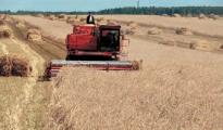 Хозяйства Беларуси завершают уборку зерновых