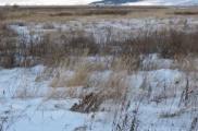 КГК: земля раздается инвестором и зарастает сорняками