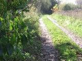 Запрет на посещение лесов снят во всех регионах Беларуси