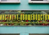 Белорусские огурцы предпочитают регги
