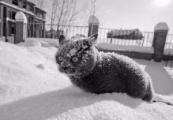 Мороз до -19 ожидается в Беларуси 9 января