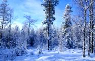 В лесах Гродненщины поймали монголов, которые шли в Польшу