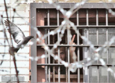 Активист «Европейской Беларуси» Данила Гончаров осужден на 25 суток