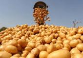 Урожай Беларуси в 2017 году увеличился на 12 процентов