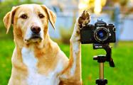 Как пес-фотограф из Минска снимает свою повседневность